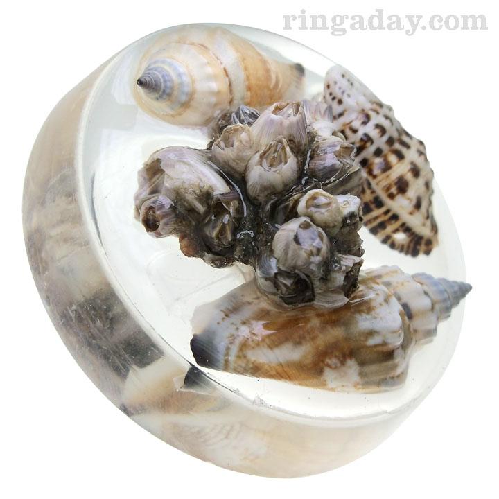 Arthropods in resin