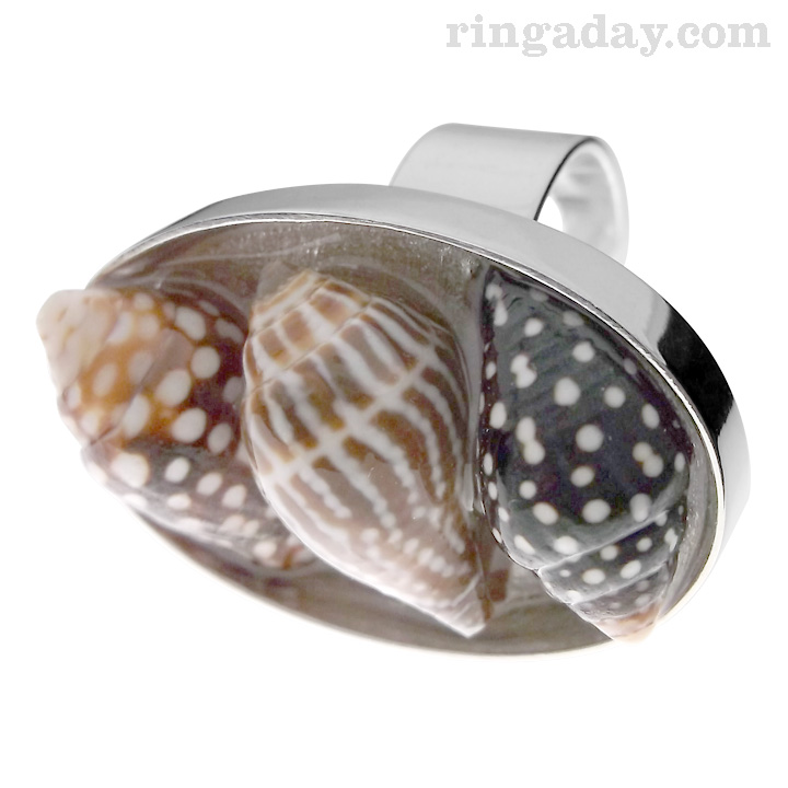 3 shells in resin on silver ring